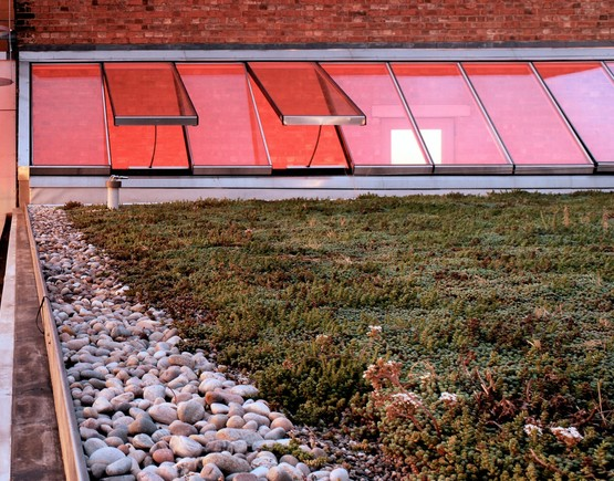 Sedum roof at the young vic. project by haworth tompkins. photo by philip vile listing
